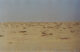 Fayoum Desert - Al Fayoum - الفيوم